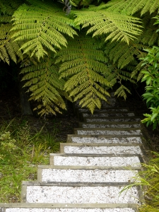 steps ferns
