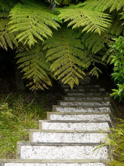 steps ferns