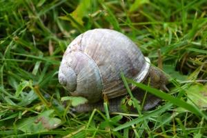 hostel snail