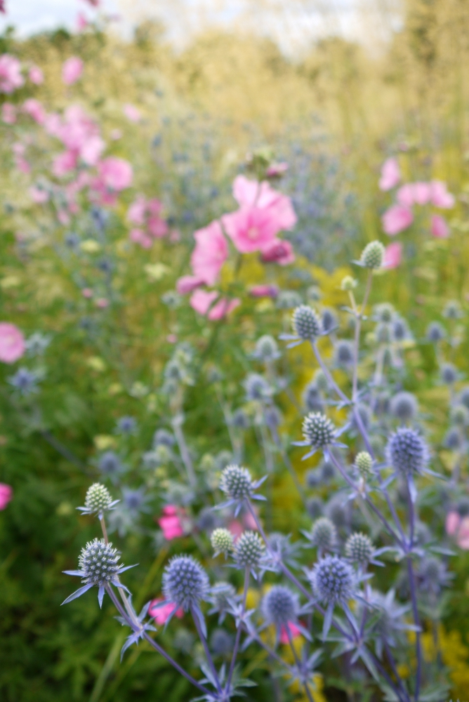 pink blue flowers 1 scaled