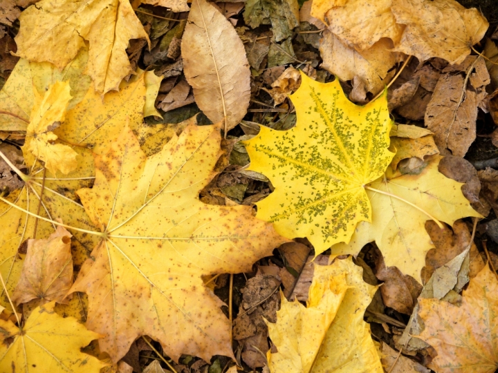 yellow leaves close
