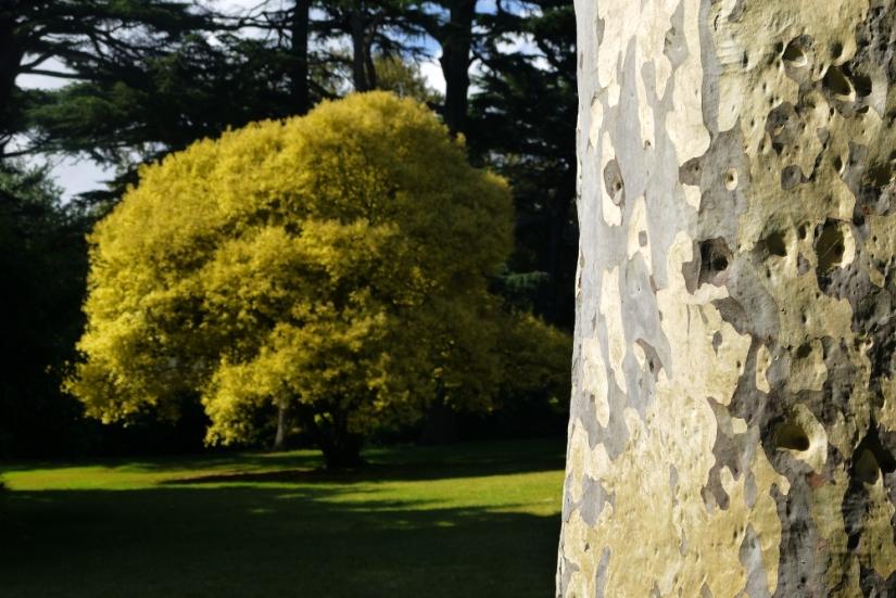 Fitzroy Gardens trees