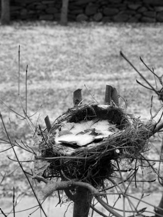 January 2012 empty nest snow Massachusetts