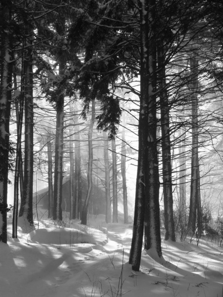 January 20111 forest snowstorm Massachusetts