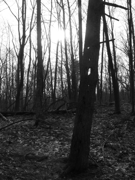 January 2006 dead trunk woodpecker holes Massachusetts