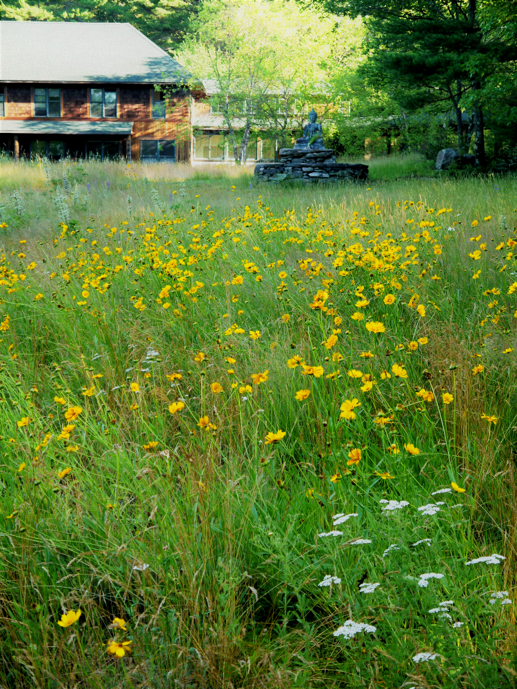 FR meadow Buddha