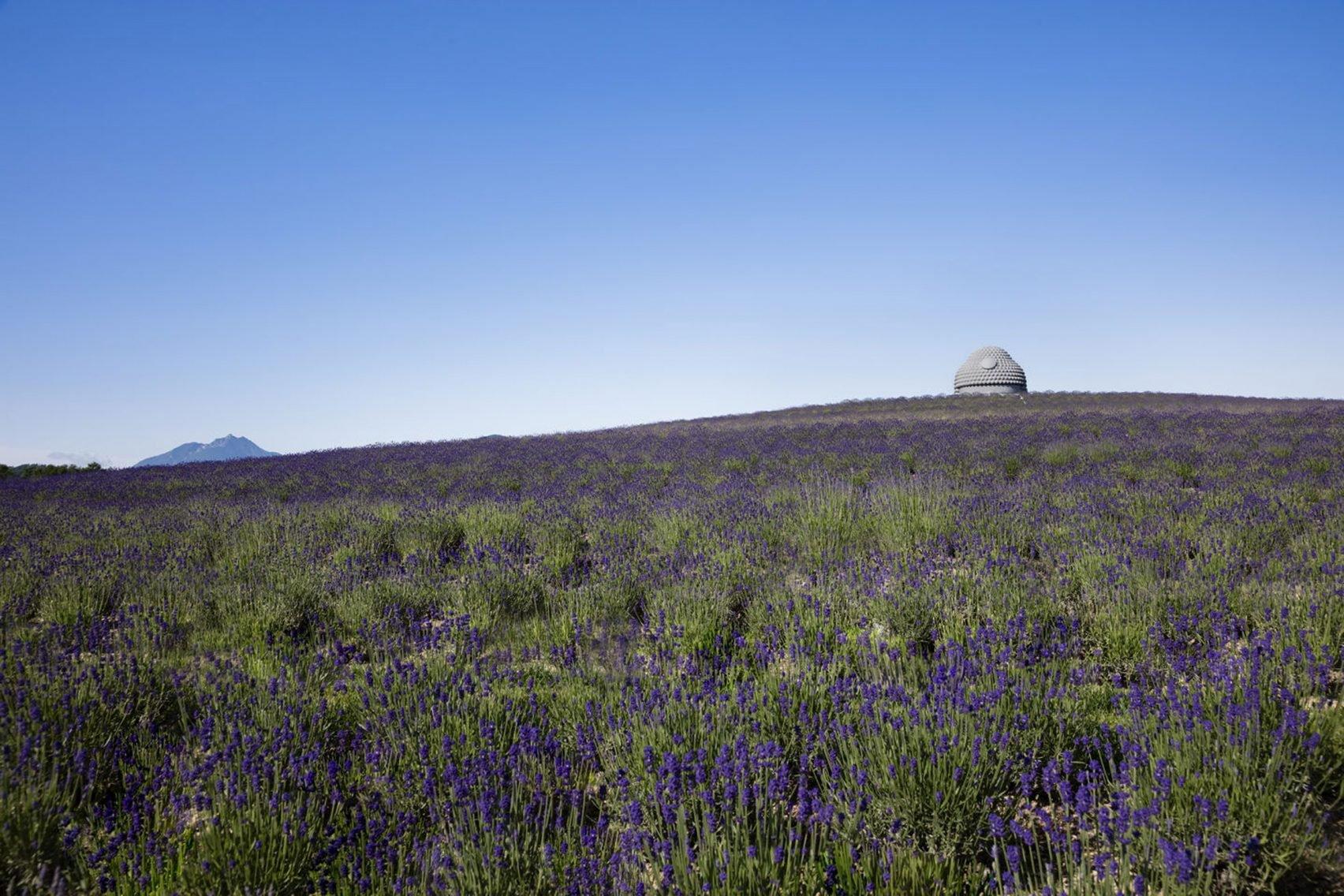 Buddha hill tadao ando lavender