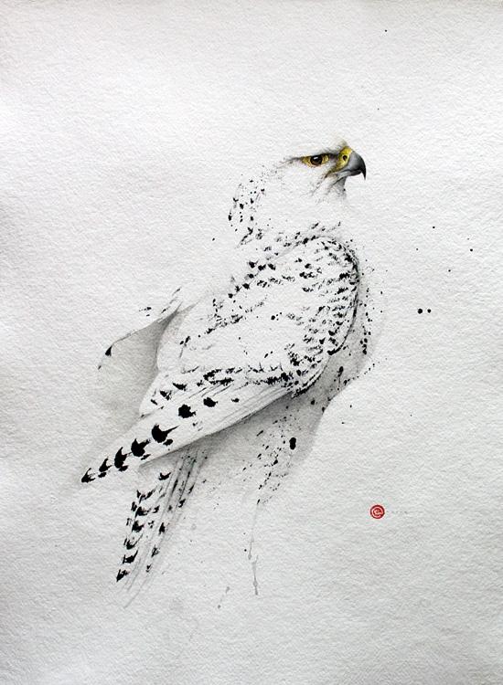 Gyr Falcon - Karl Martens